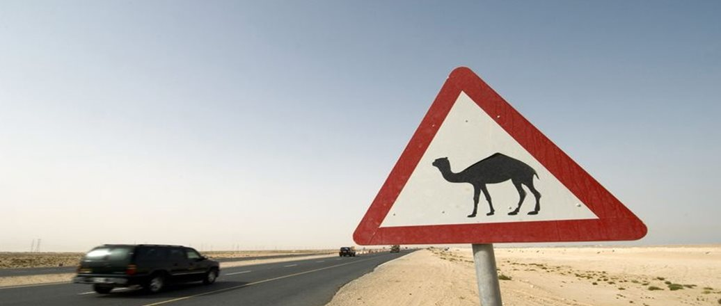 Camel warning side along desert road