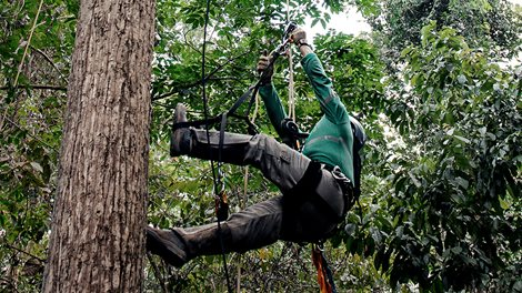 tree climber in protective gear and harness
