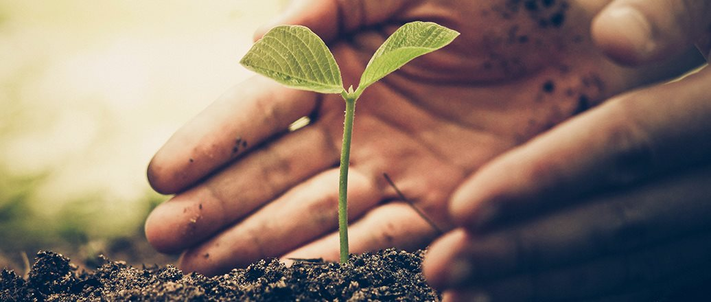 hands protecting a seedling