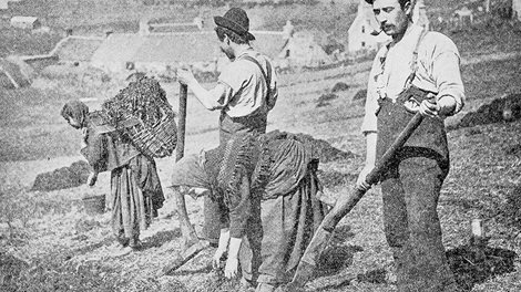 men and women working a field